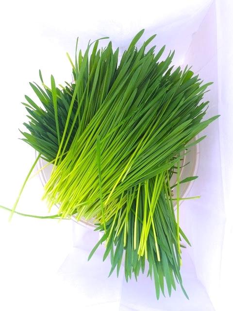050516_Wheatgrass.jpg