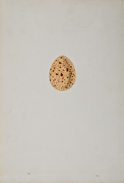 French, 19th century,  Study of an Egg (35),  watercolor on paper, 10 x 6 3/4""