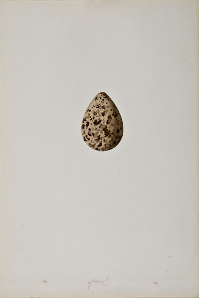 French, 19th century,  Study of an Egg (36),  watercolor on paper, 10 x 6 3/4""