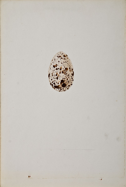 French, 19th century,  Study of an Egg (37),  watercolor on paper, 10 x 7""