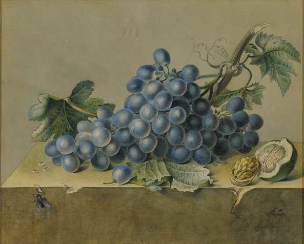 French, 19th century,  Still Life with Grapes, Fly and Walnut,  watercolor, 15 3/4 x 15 5/8""