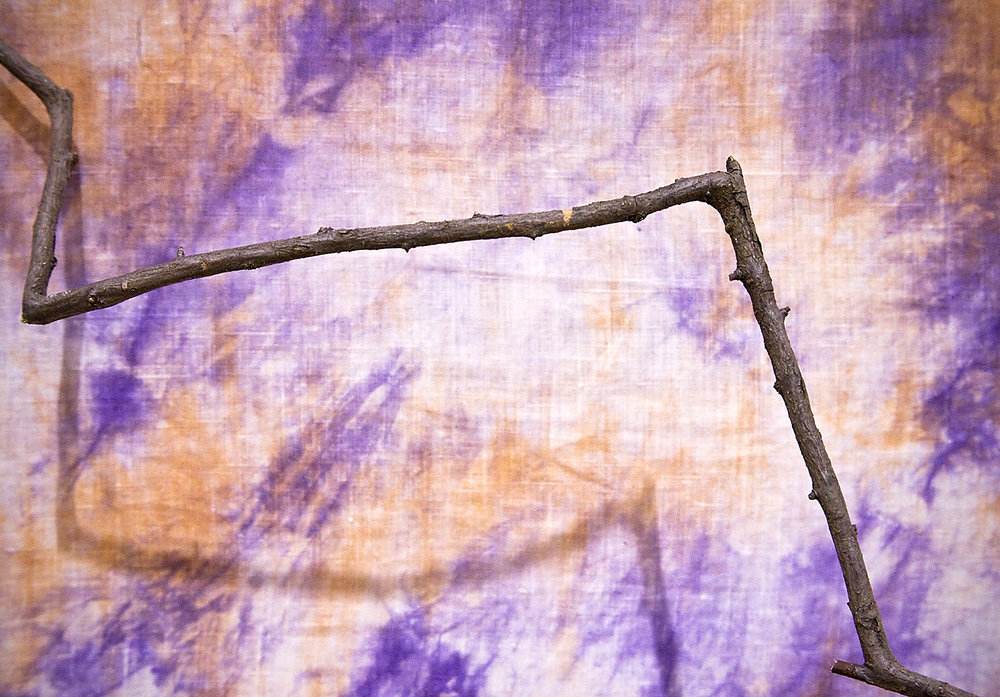 Branch and Background.jpg