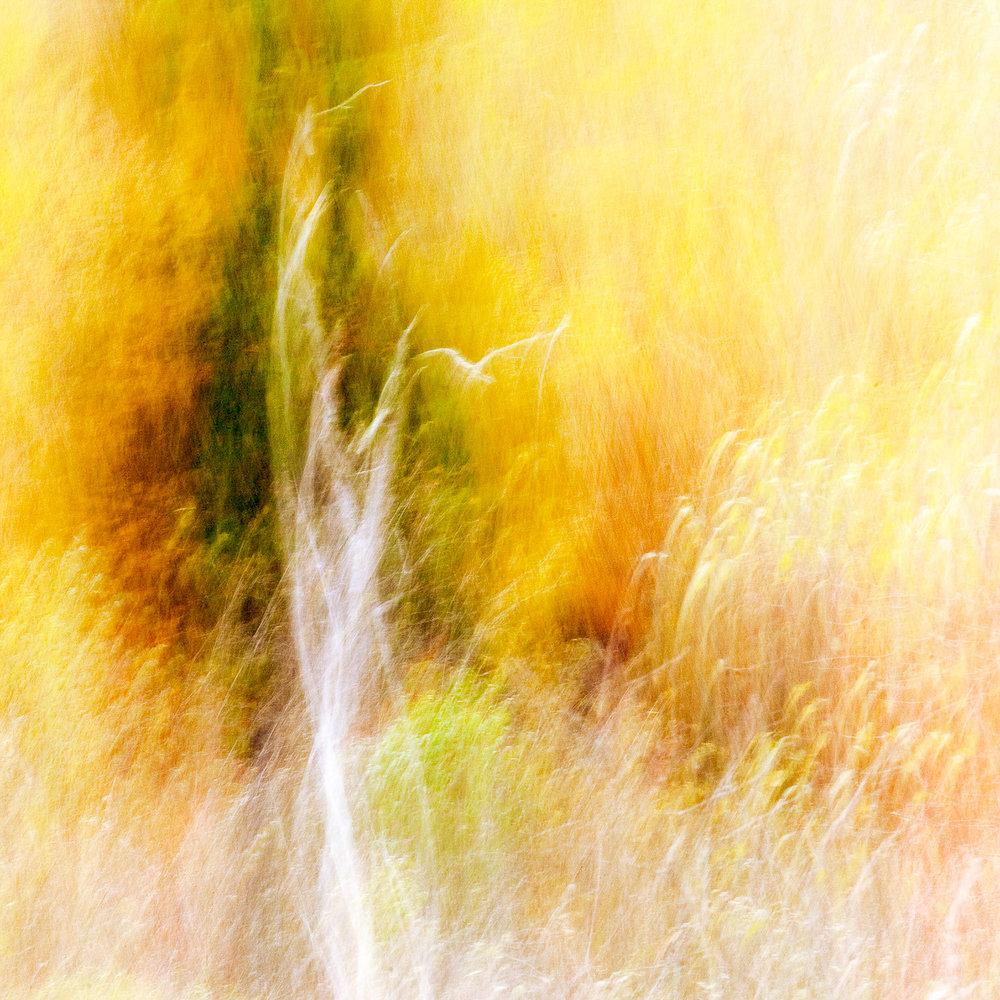 Autumn Impressions #2