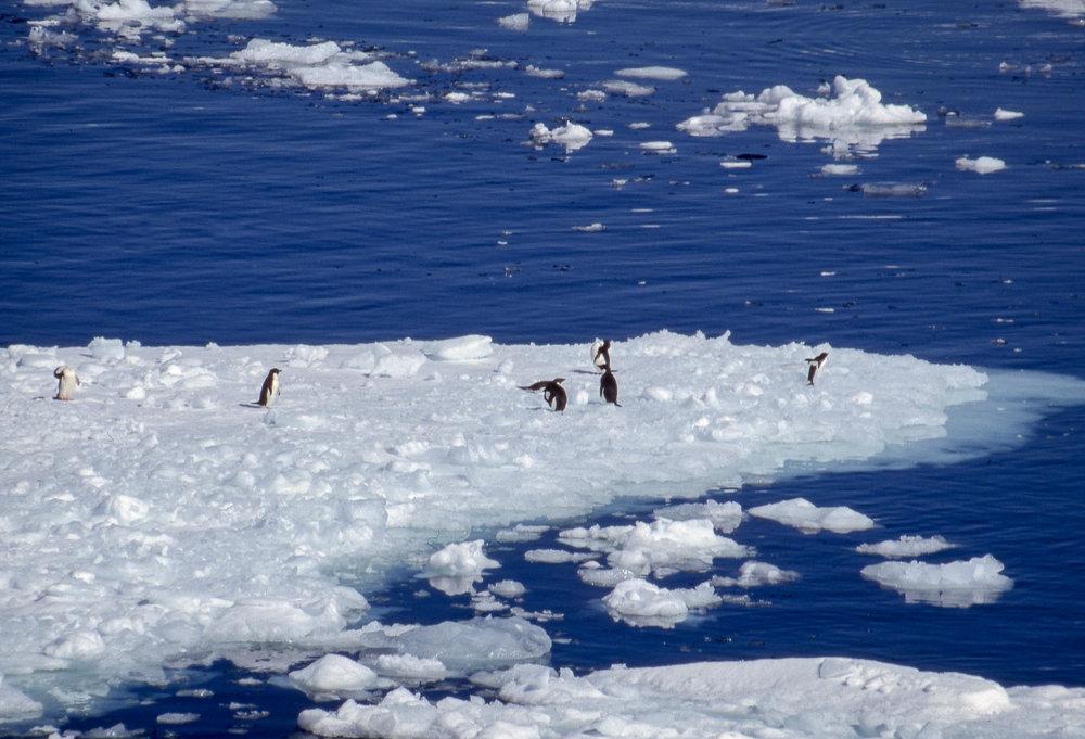 Antarctica Batch1004.jpg