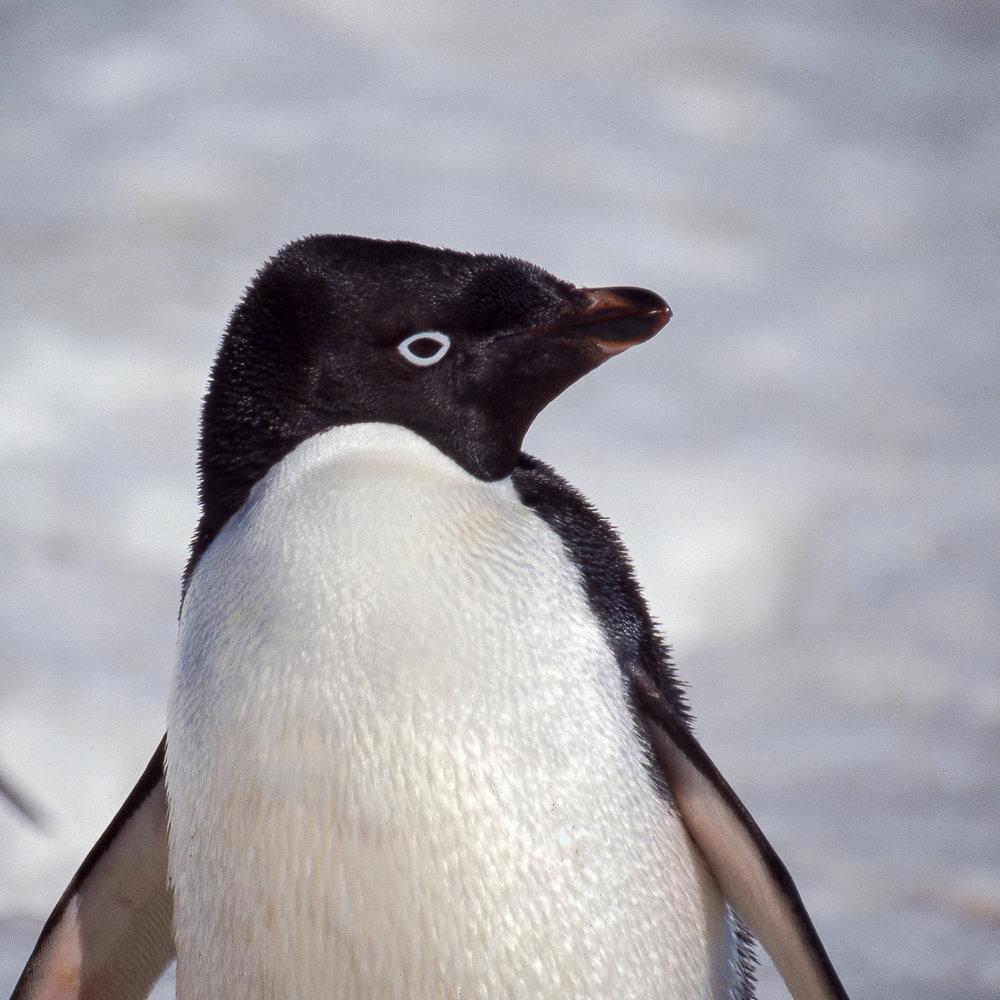Birds of Antarctica