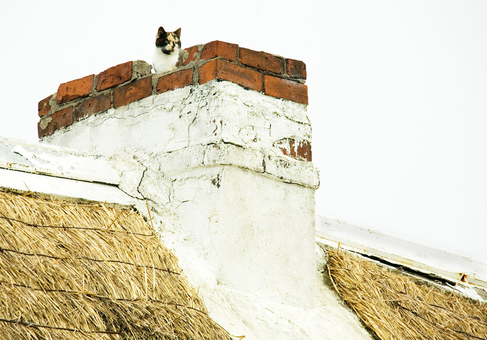 Chimney Cat 10.5x15.jpg