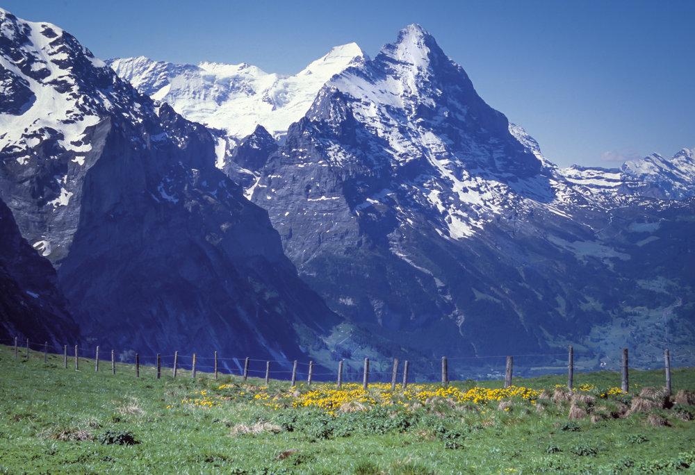 Eiger&Wildflowers.jpg