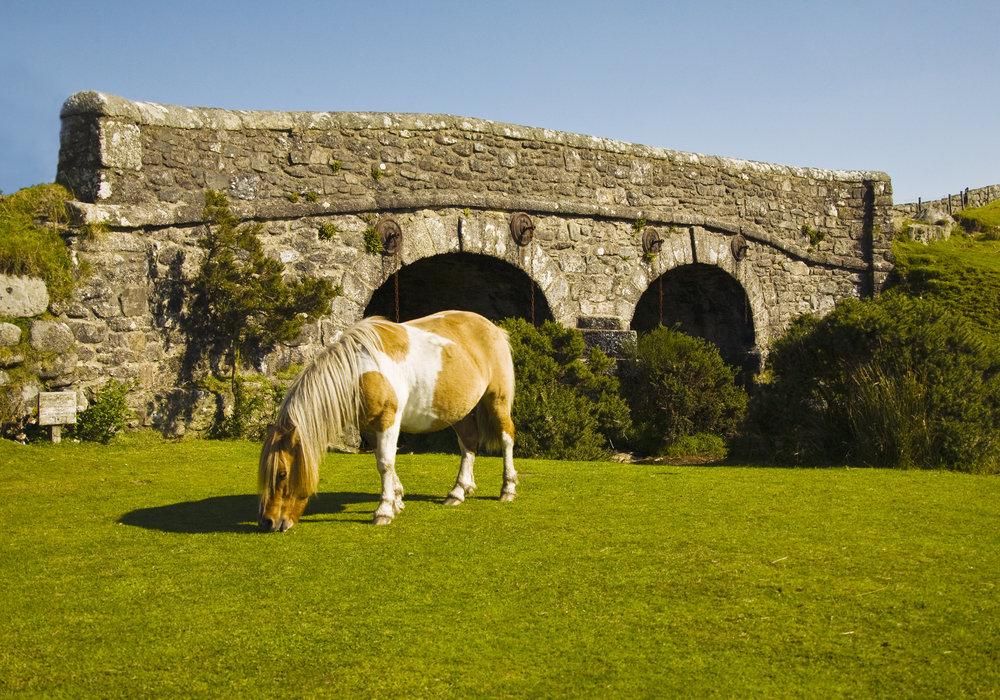 Dartmoor Pony_10.5x15.jpg
