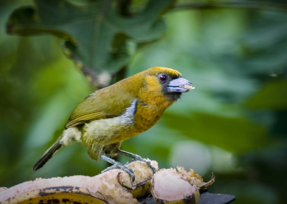 C1 Yellow bird 3 5x7.jpg