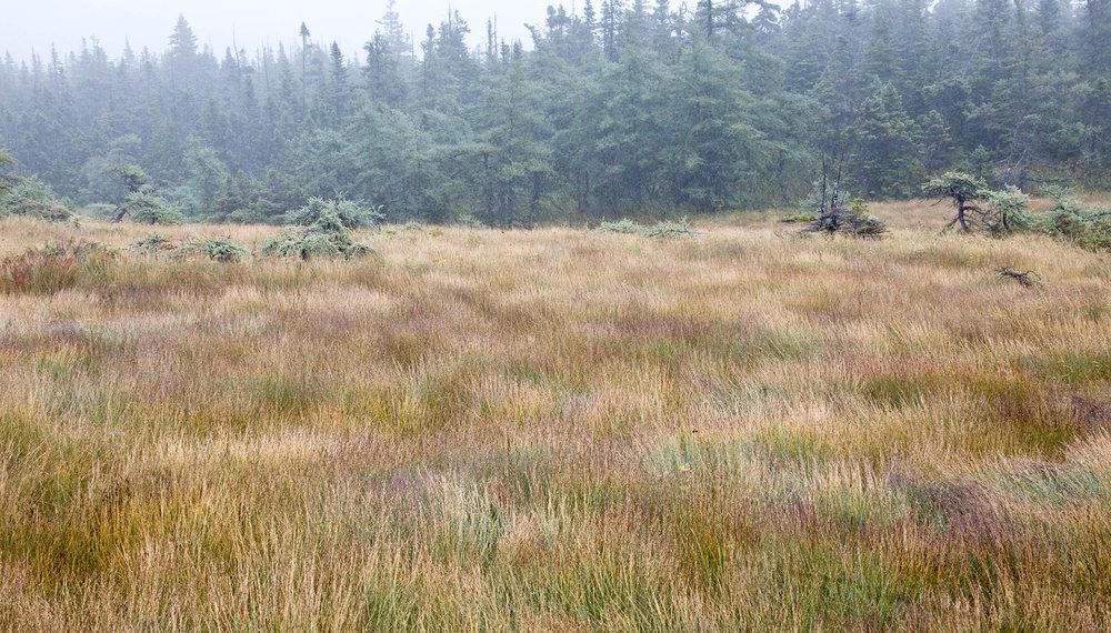 Bog Trail24_PRWF.jpg