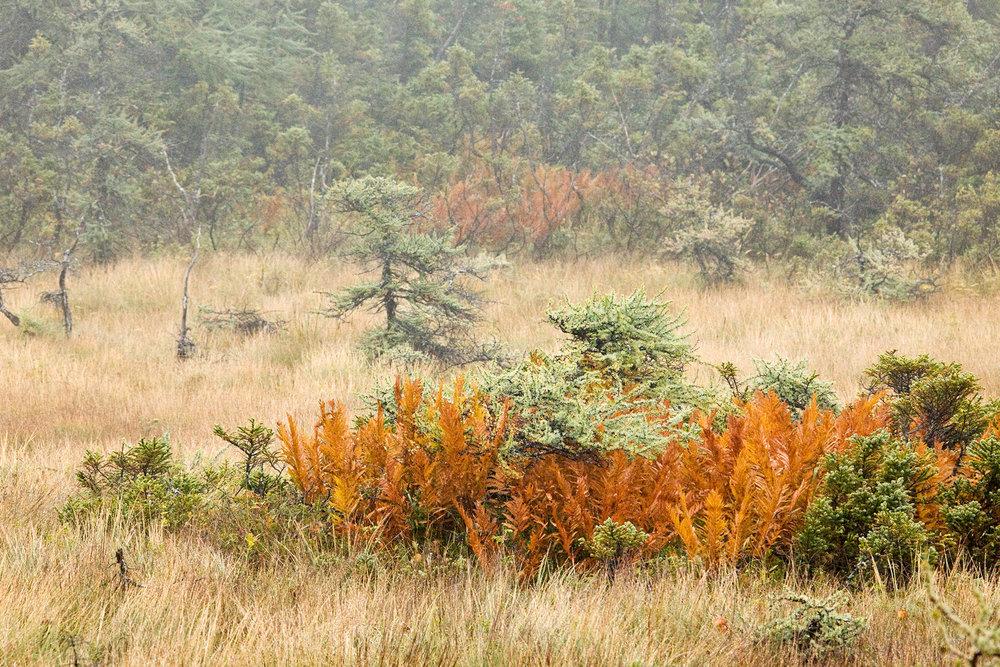 Bog Trail30_PRWF.jpg