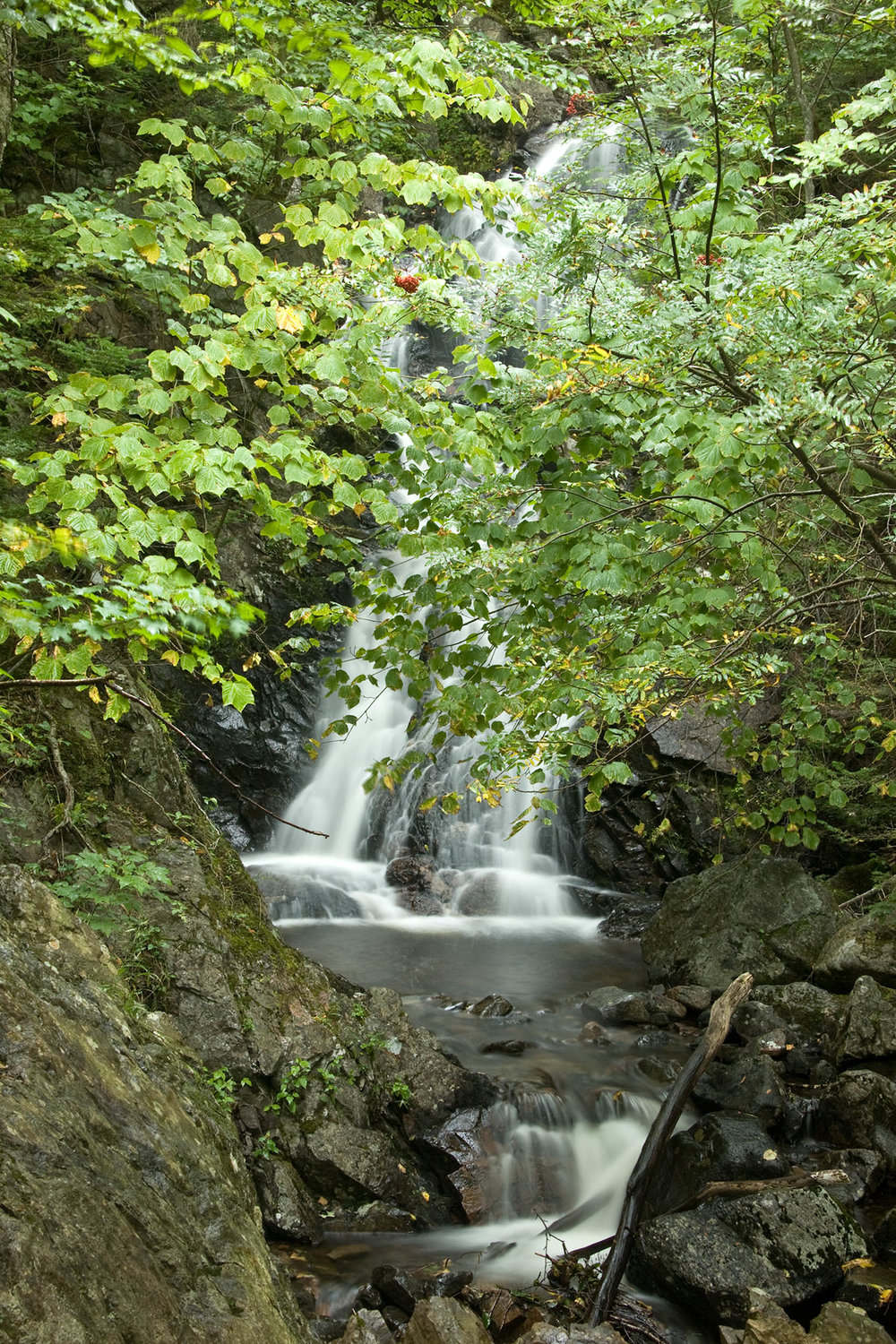 Corney Brook Trail12_PRWF.jpg