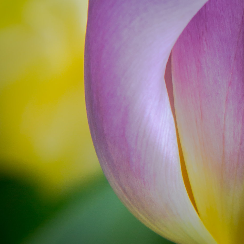 Flower Abstracts