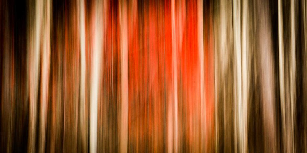 _MGL7538_Woodland Sparkleberries.jpg