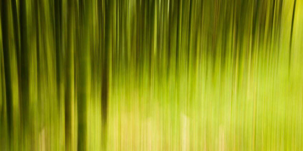 _MGL8950_Bamboo in the Mist.jpg