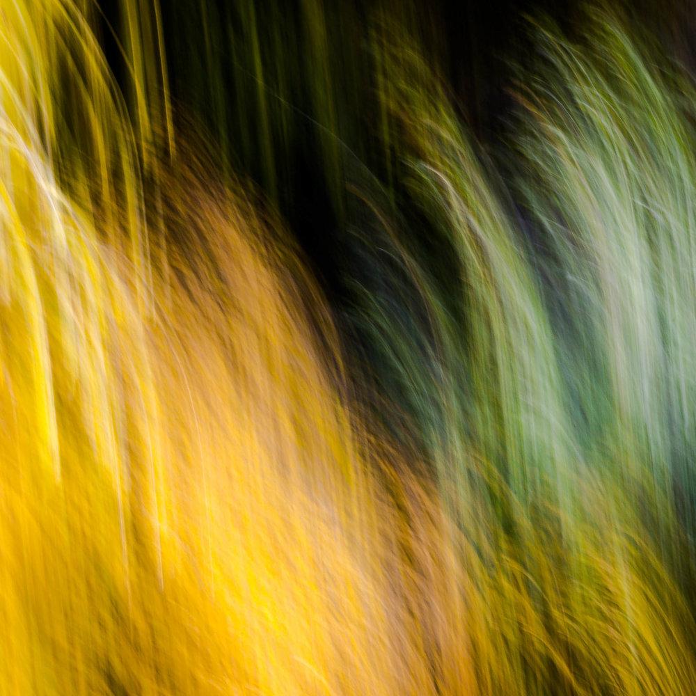 _MGL6290_Woodlands Diptych #1.jpg