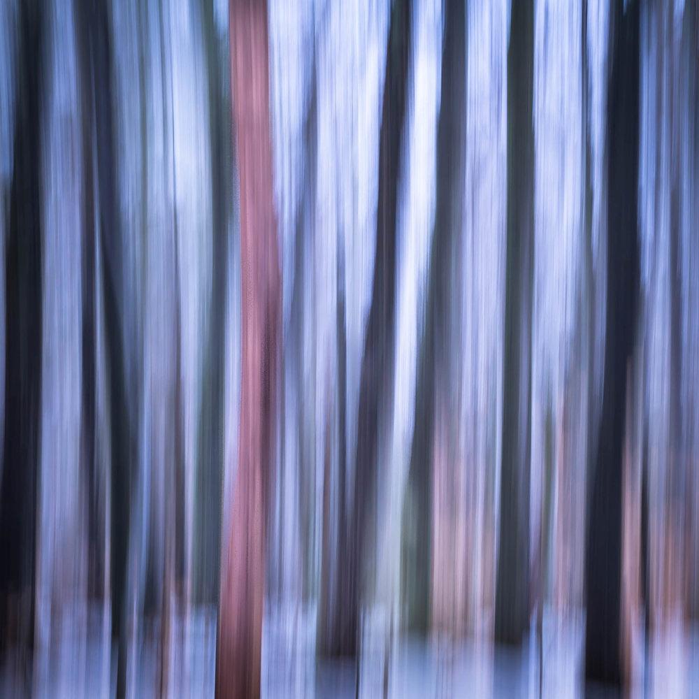 _MGL4653_Woodland Winter-2.jpg