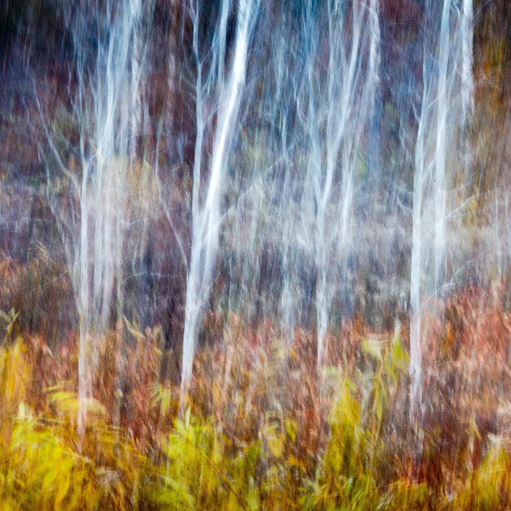 _MGL7415_Woodland Imagined.jpg