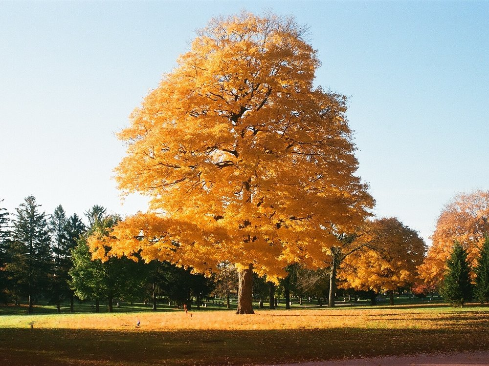 epic yellow tree.jpg