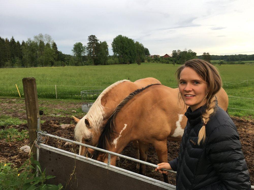 On the farm near Molkom