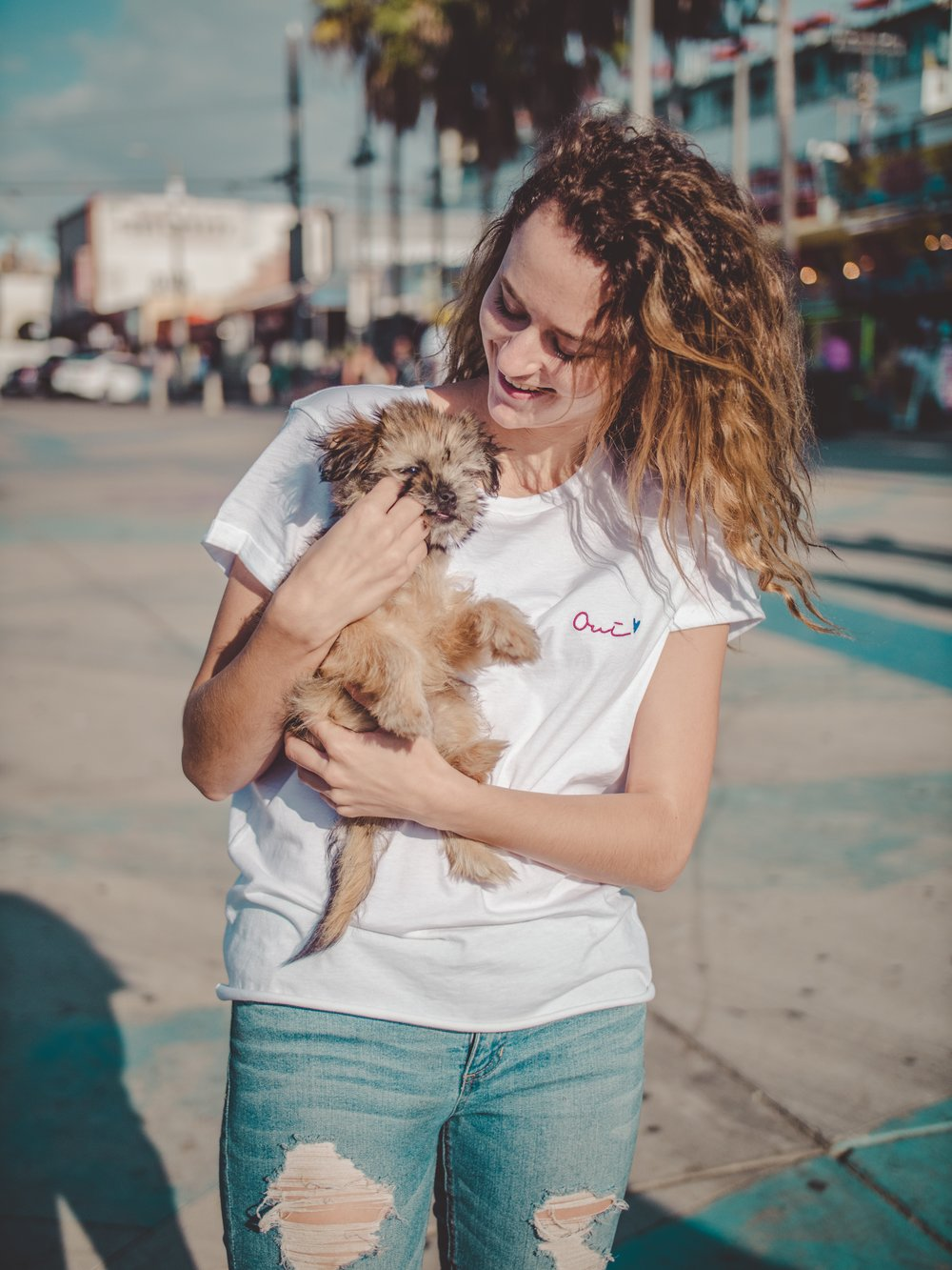 Adopt a puppy in Santa Monica