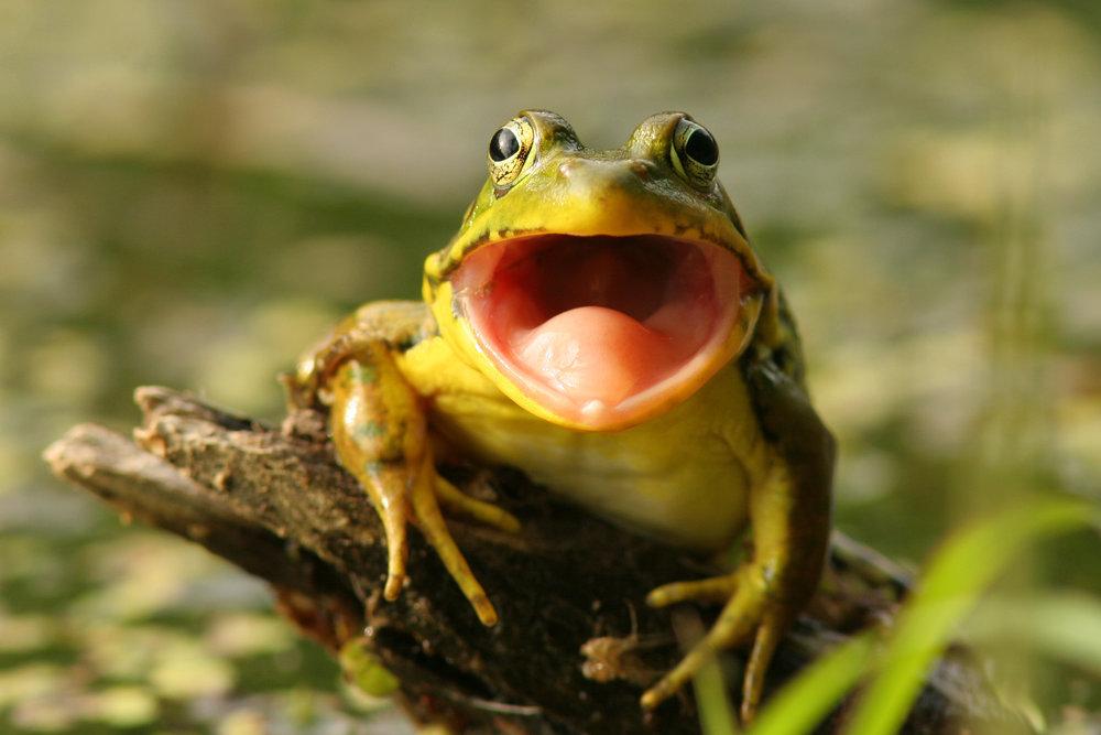 cute frog in west LA