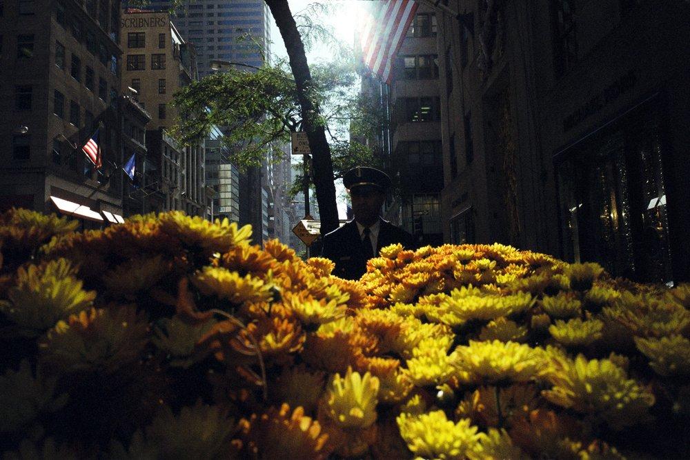 flores_37561908030_o.jpg