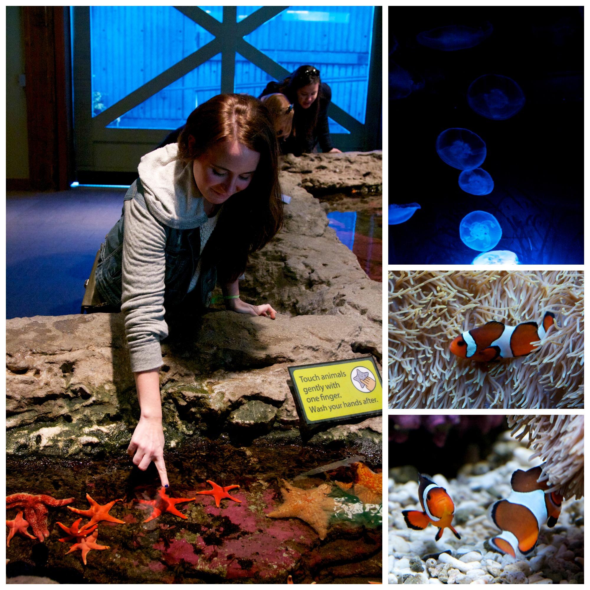 Aquarium Collage
