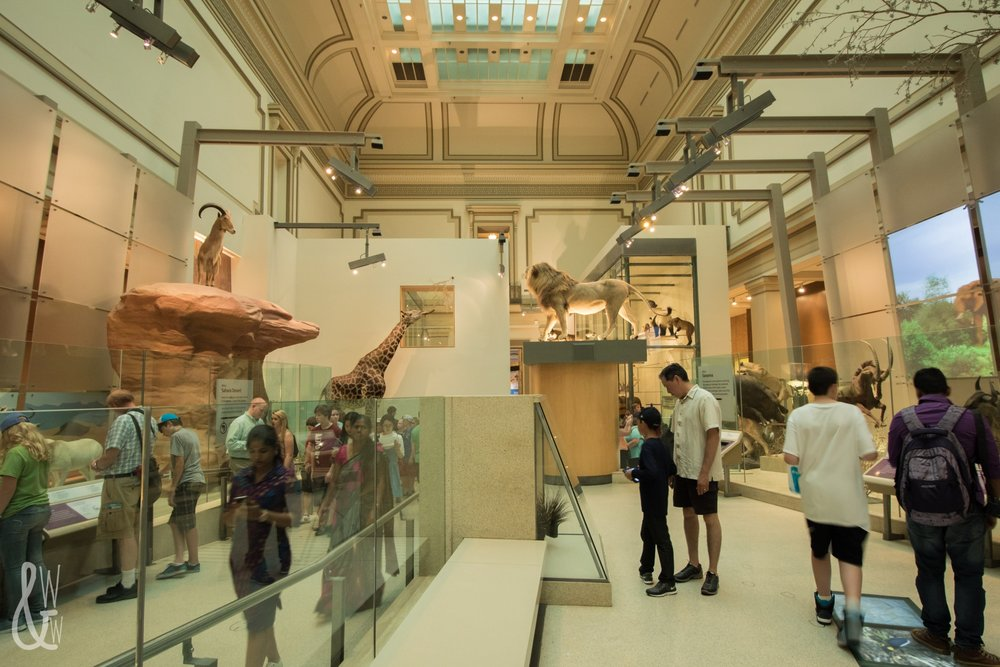 Mammals at the Museum of Natural History