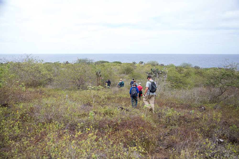 Hiking to the coast to see sea turtles.