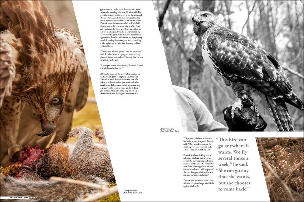 The Art of Falconry_Print4.jpg