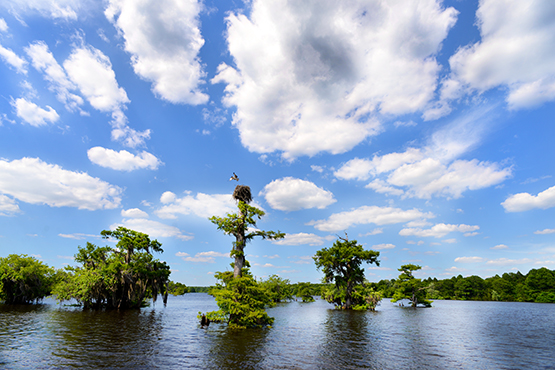 Dead Lakes Gulf County Florida - Global Dish - Stephanie Arsenault