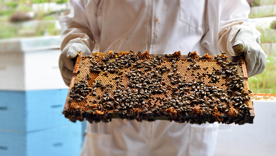 Arlo's Honey Farm Kelowna - Global Dish - Stephanie Arsenault