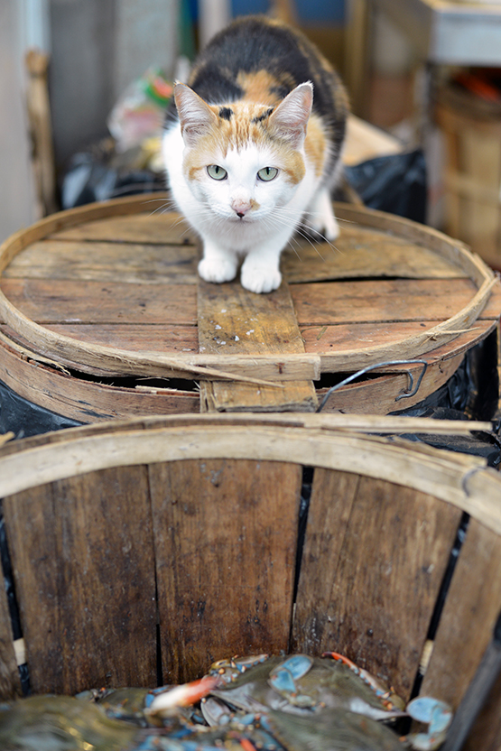 A curious kitten waits for a passerby to sneak him a treat in NYC's Chinatown - Global Dish - Stephanie Arsenault