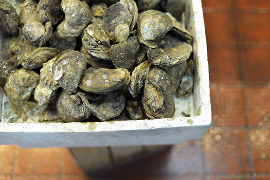 Fresh oysters for sale by the pound in NYC's Chinatown - Global Dish - Stephanie Arsenault