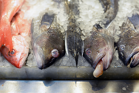 Fresh fish in NYC's Chinatown - Global Dish - Stephanie Arsenault