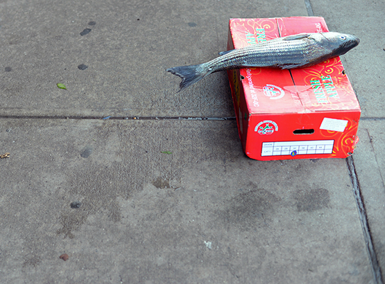 Lone fish in NYC's Chinatown - Global Dish - Stephanie Arsenault