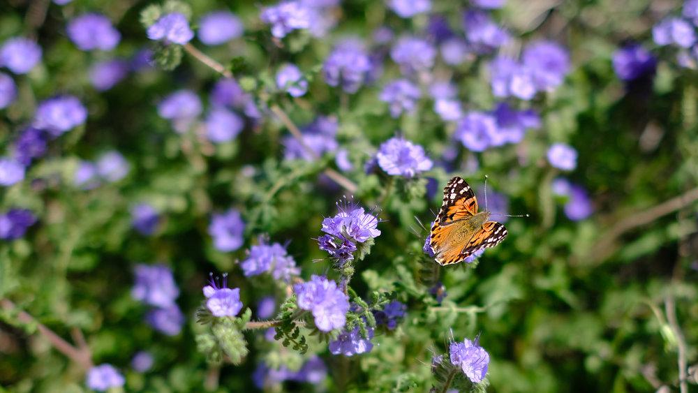 Wildflower Super Bloom in the Anza-Borrego Desert State Park - Stephanie Arsenault - Global Dish