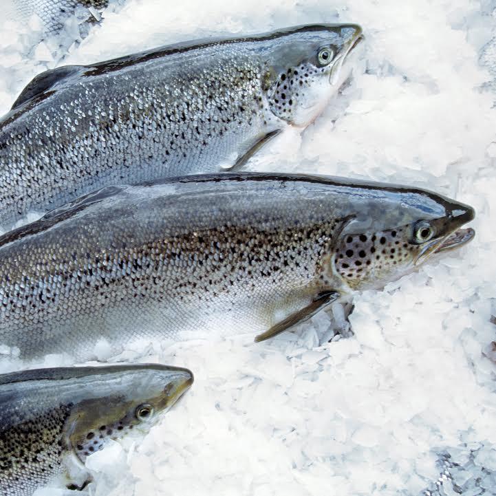 SalmonHuon.jpg