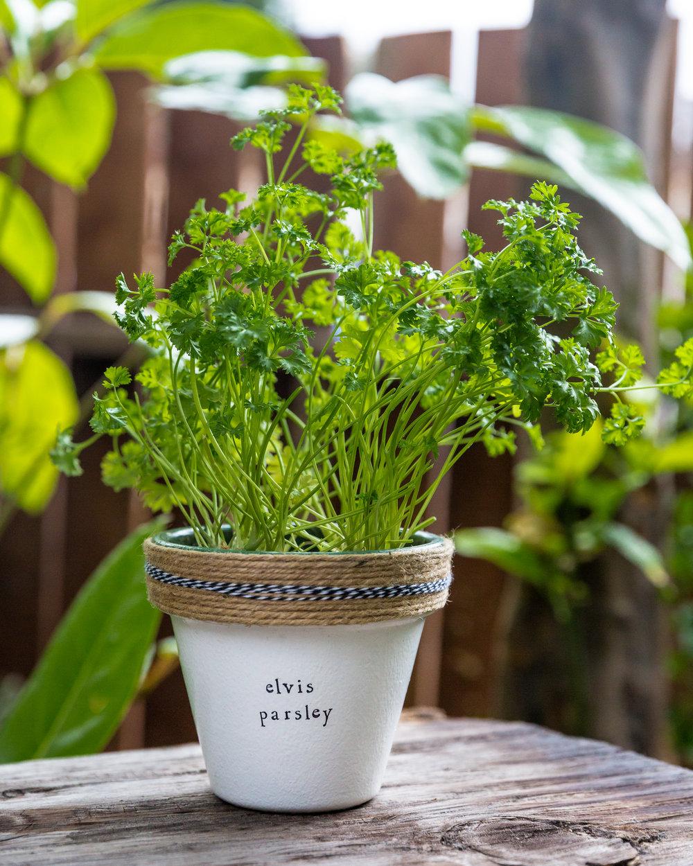 170510 plant puns - 4818.jpg