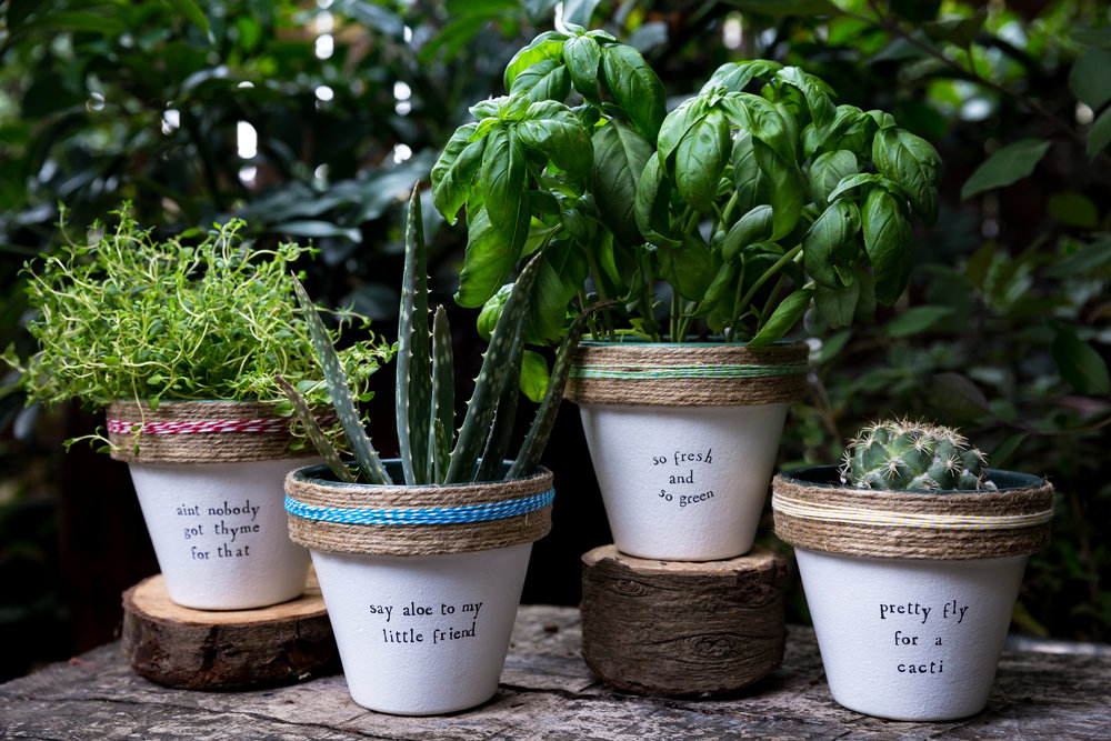170510 plant puns - 4988.jpg