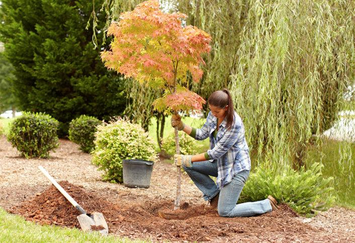 Dammanns Garden Company Planting Instructions