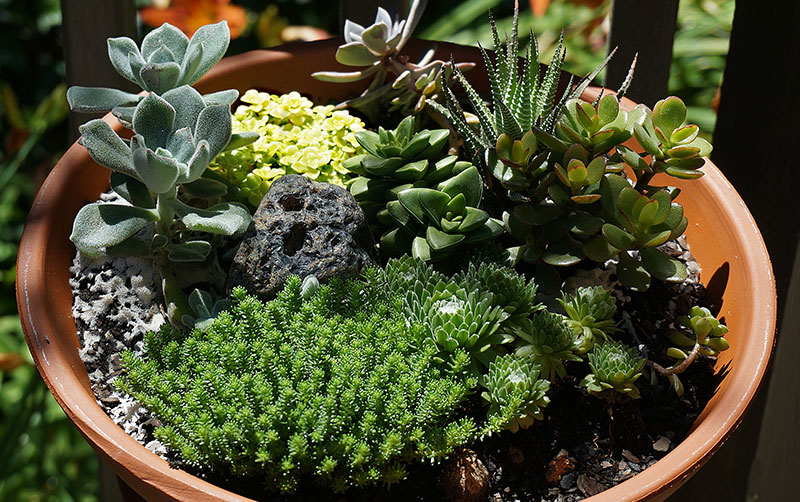 SucculentContainer-Terracotta.jpg