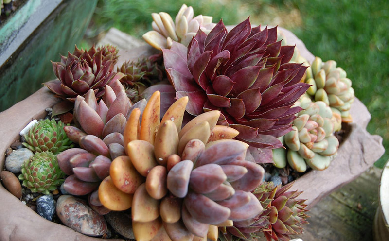 Dammann's-ContainerTrends-Succulents.jpg