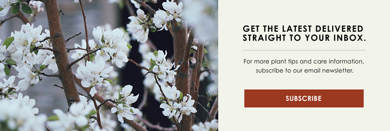 InBlog-CTA-Pruning.jpg