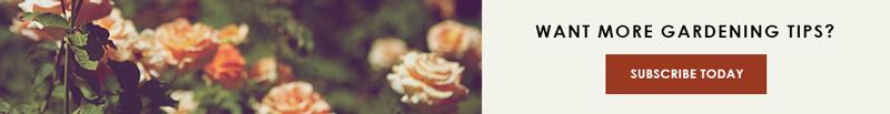 Small-CTA-ROSE.jpg