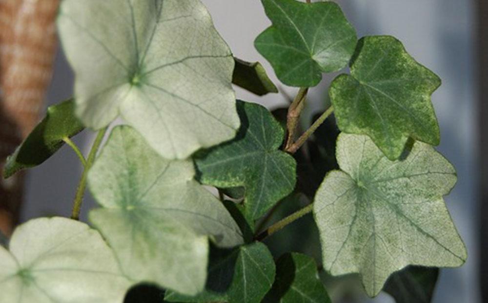 Coleus, Impatiens, Begonias