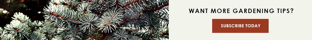 InBlog-CTA-ChristmasTrees