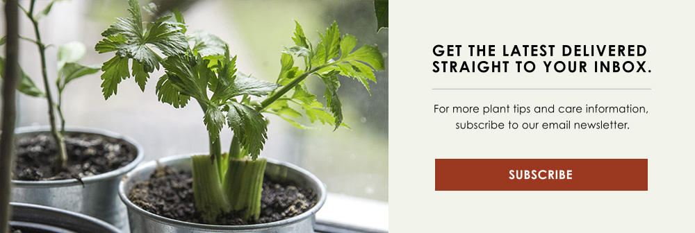 growing vegetables CTA