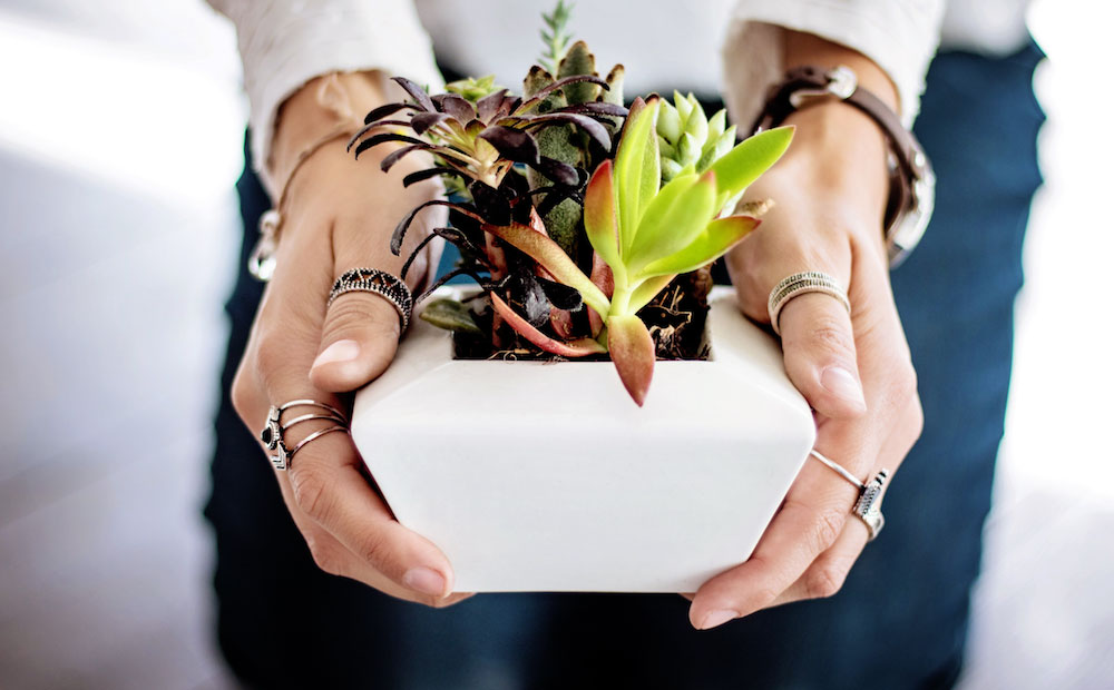 female hands holding succulent plant